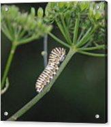 Twilight Caterpillar Acrylic Print