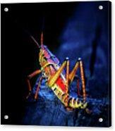 Twilight Grasshopper Acrylic Print