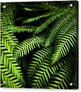 Twilight Rainforest Fern  Acrylic Print