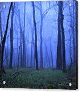 Twilight Woods Acrylic Print