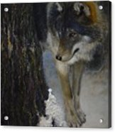 Twilight's Preyer  Acrylic Print