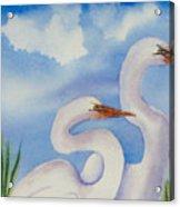 Twin Egrets 2 Acrylic Print