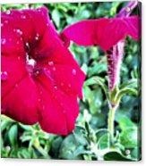 Twin Flower Power Acrylic Print
