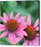Twin Flowers Acrylic Print