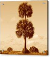 Twin Palms Acrylic Print