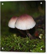 Twin Peaks - Pink And White Mushroom Duo Acrylic Print