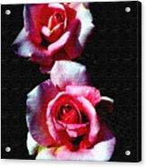 Twin Roses Acrylic Print