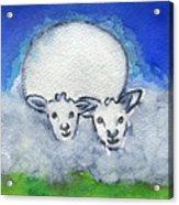 Twin Sheep Acrylic Print