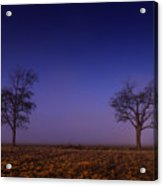 Twin Trees In The Mississippi Delta Acrylic Print
