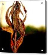 Twist Plant Acrylic Print