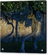 Twisted Early Morning Shadows Acrylic Print