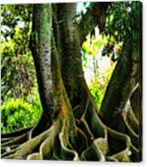 Twisted Acrylic Print by Tom Prendergast