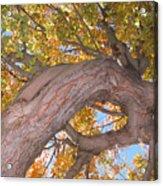 Twisted Tree Acrylic Print