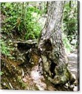 Twisted Tree Smoky Mountains Acrylic Print