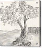Twisted Trees Acrylic Print