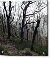 Twisted Woods Acrylic Print