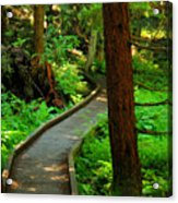 Twisting Path Through The Woods Acrylic Print