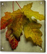 Two Autumn Leaves Acrylic Print