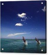Two Bottlenose Dolphins Dancing Across Acrylic Print
