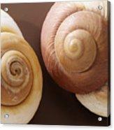 Two Brown Shells Acrylic Print