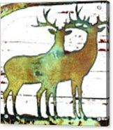 Two Bucks 2 Acrylic Print