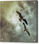 Two By Two They Flew Acrylic Print