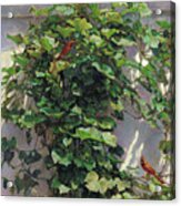 Two Cardinals On The Vine Tree Acrylic Print