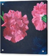 Two Carnations Acrylic Print
