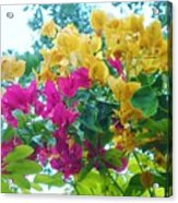Two Color Flowers Acrylic Print