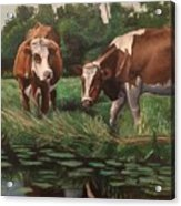 Two Cows By A Pond Acrylic Print