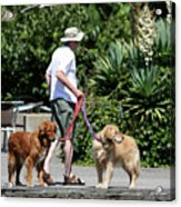 Two Dogs And Man Acrylic Print