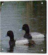 Two Ducks In The Rain Acrylic Print