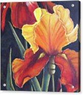 Two Fiery Iris Acrylic Print