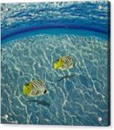 Two Fish Acrylic Print
