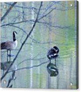Two Geese On A Lake Acrylic Print