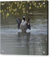Two Geese On A Pond Acrylic Print