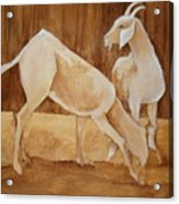 Two Goats In Sepia Acrylic Print