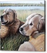 Two Golden Retriever Acrylic Print