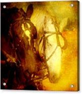 Two Horsepower Acrylic Print