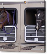 Two Horses Are Ready To Travel Acrylic Print