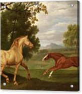 Two Horses In A Landscape Acrylic Print