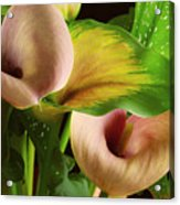 Two Lily With Leaf Acrylic Print