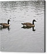 Two Lovely Canadian Geese Acrylic Print