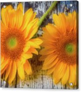 Two Lovely Sunflowers Acrylic Print