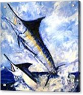 Two Marlin A Blue And A Striper Acrylic Print