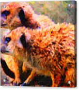 Two Meerkats . Photoart Acrylic Print by Wingsdomain Art and Photography