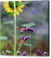 Two Monarch Butterflies And Sunflower 2011 Acrylic Print