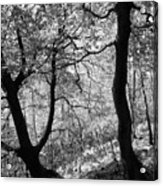Two Monochrome Tress Acrylic Print