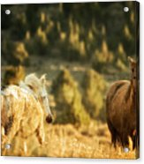Two Mustangs Post Playtime At The Waterhole Acrylic Print