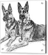 Two Of A Kind - German Shepherd Dogs Print Acrylic Print by Kelli Swan